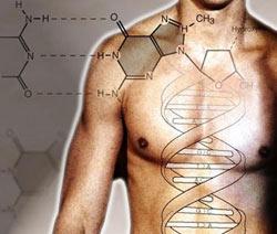 Генетика человека.