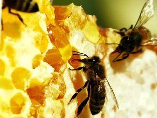 пчелинный мед