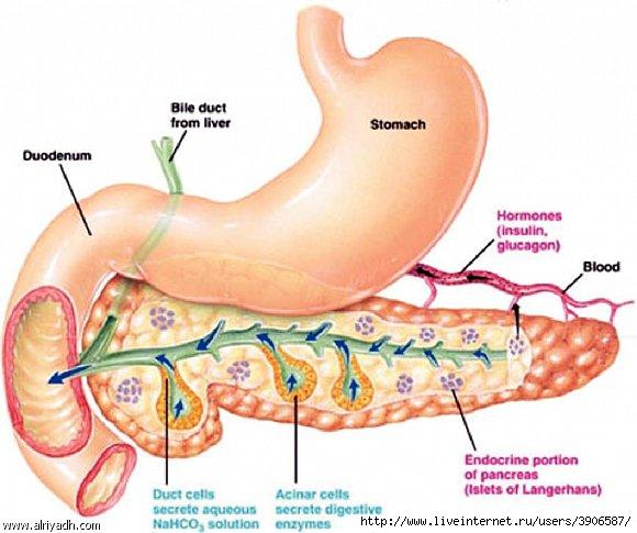 Панкреатит - методы лечения и профилактика