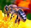 Пчелы подарят здоровье