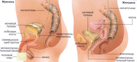 после смены пола фото половых органов