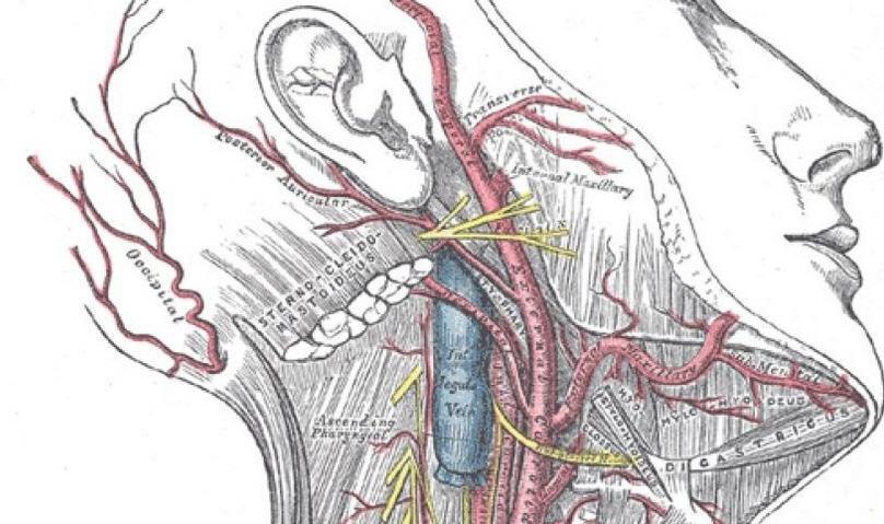 Невралгия тройничного нерва: симптомы, диагностика, лечение и профилактика