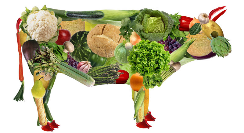 Вредно ли вегетарианство