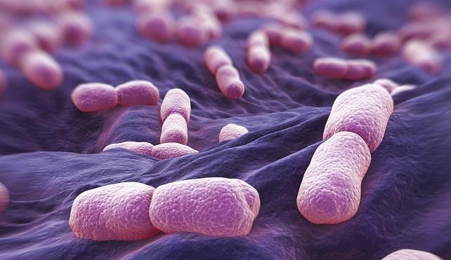 листериоз бактерии